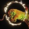 Цирки в Хабаровске