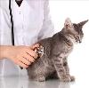 Ветеринарные клиники в Хабаровске
